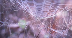 Tela de araña artificial - Materiales del futuro